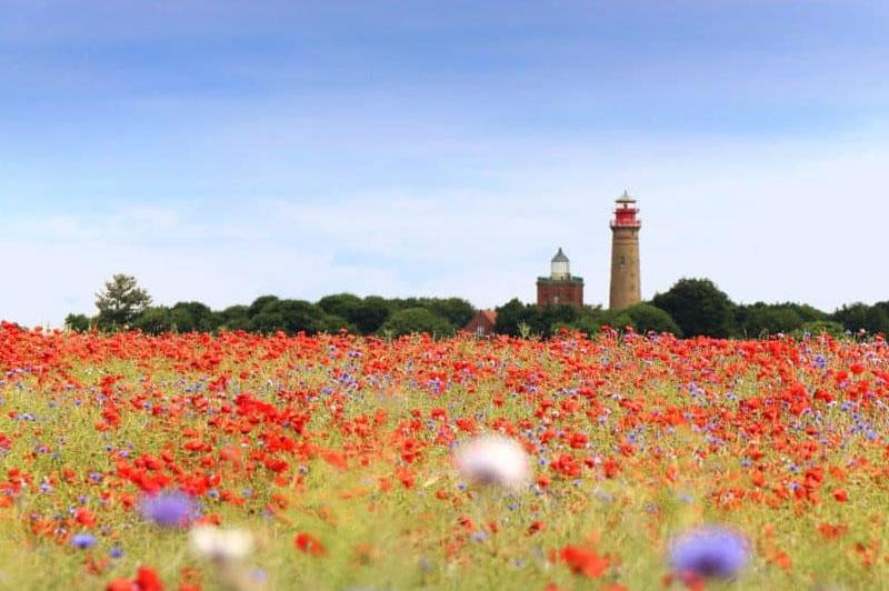 Blumenfeld an der Ostsee
